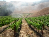 award winning Pinot Noir vineyard - feel free to strole our vineyards or take a walk on several miles of trails just ouside the driveway.
