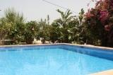 Bambús lovely pool