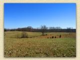 The Overlook Farm