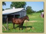 A friendly horse on the Overlook Farm