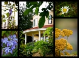 Villa Flowers - The beauty of the Villa