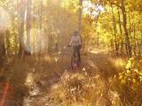 Golden Ride - Golden aspen ablaze at foot of Mt. Tallac