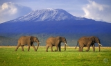 East Africa Wildlife Safari -- Guided Tours for Gay Travelers - Gay Group Safari Vacations in Africa