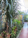 Common area/walkway to rooms - Just some of the lush foliage around the Hotel