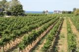 Vineyards at Hinterbrook