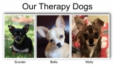Our therapy dogs