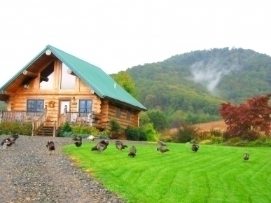 Ashville Cabin's Tranquility Knoll