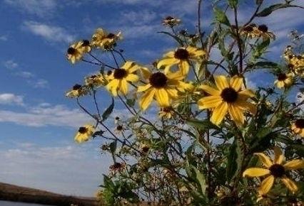 Broad View Wildflower Seed