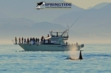 SpringTide Whale Watching Tours & Charters