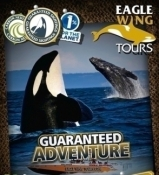 Eagle Wing Whale Watching Tours & Charters