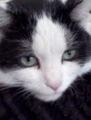 Pets at Peace - Pet Loss and Memorial Svcs