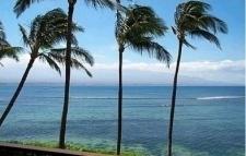 Maui Dreamin