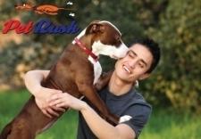 Pet Rush - Dog Grooming & Pet Boutique